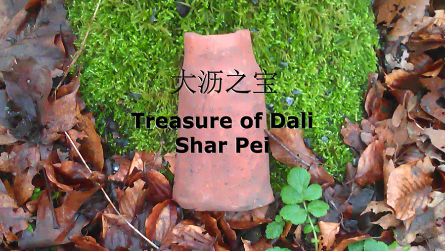 Treasure of Dali Shar Pei